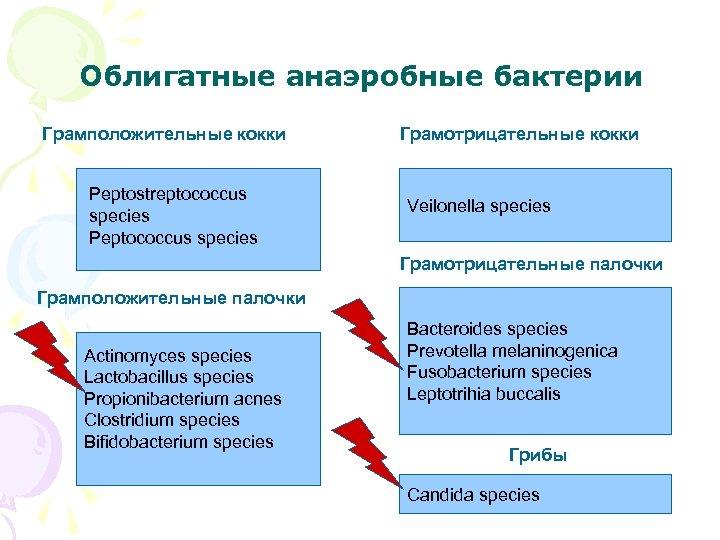 Облигатные анаэробные бактерии Грамположительные кокки Peptostreptococcus species Peptococcus species Грамотрицательные кокки Veilonella species Грамотрицательные
