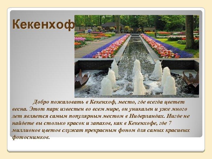 Кекенхоф Добро пожаловать в Кекенхоф, место, где всегда цветет весна. Этот парк известен во