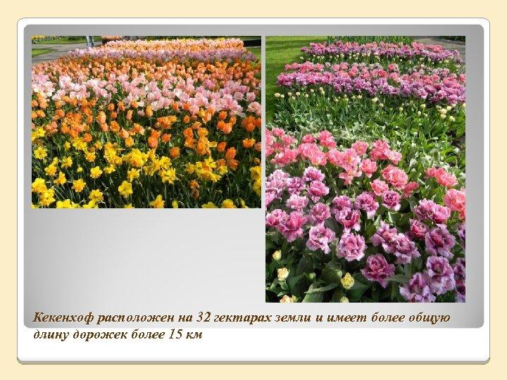 Кекенхоф расположен на 32 гектарах земли и имеет более общую длину дорожек более 15