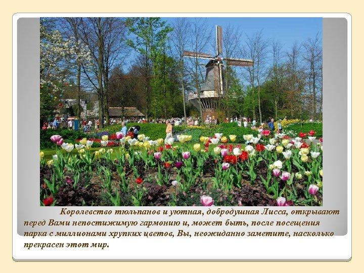 Королевство тюльпанов и уютная, добродушная Лисса, открывают перед Вами непостижимую гармонию и, может быть,