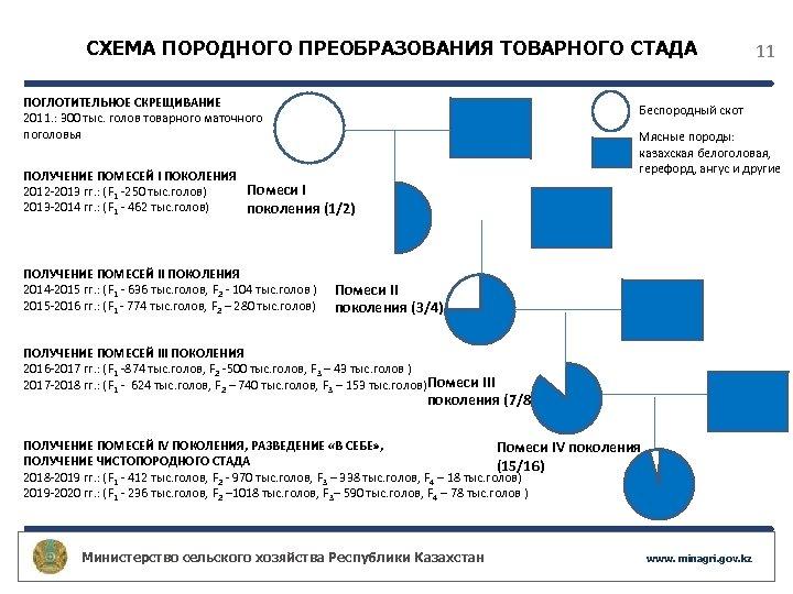 СХЕМА ПОРОДНОГО ПРЕОБРАЗОВАНИЯ ТОВАРНОГО СТАДА ПОГЛОТИТЕЛЬНОЕ СКРЕЩИВАНИЕ 2011. : 300 тыс. голов товарного маточного