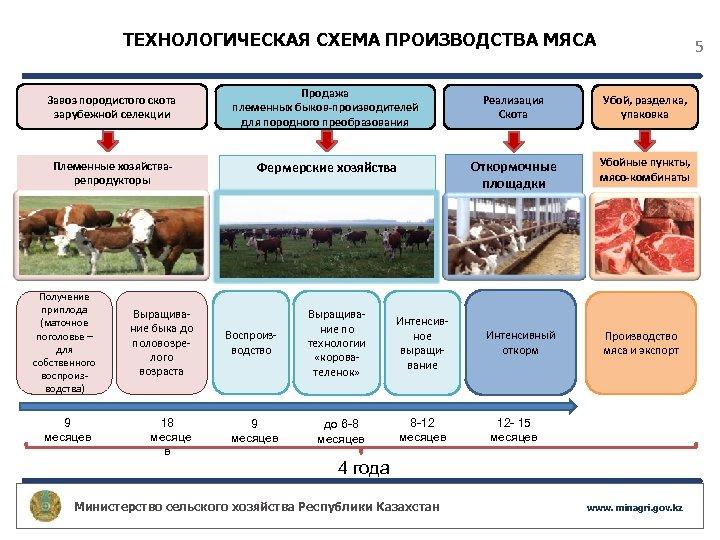 ТЕХНОЛОГИЧЕСКАЯ СХЕМА ПРОИЗВОДСТВА МЯСА Завоз породистого скота зарубежной селекции Племенные хозяйстварепродукторы Получение приплода (маточное