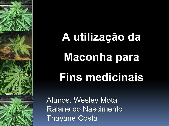 A utilização da Maconha para Fins medicinais Alunos: Wesley Mota Raiane do Nascimento Thayane