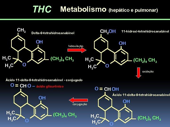THC CH 3 Metabolismo (hepático e pulmonar) OH H 3 C CH 2 OH