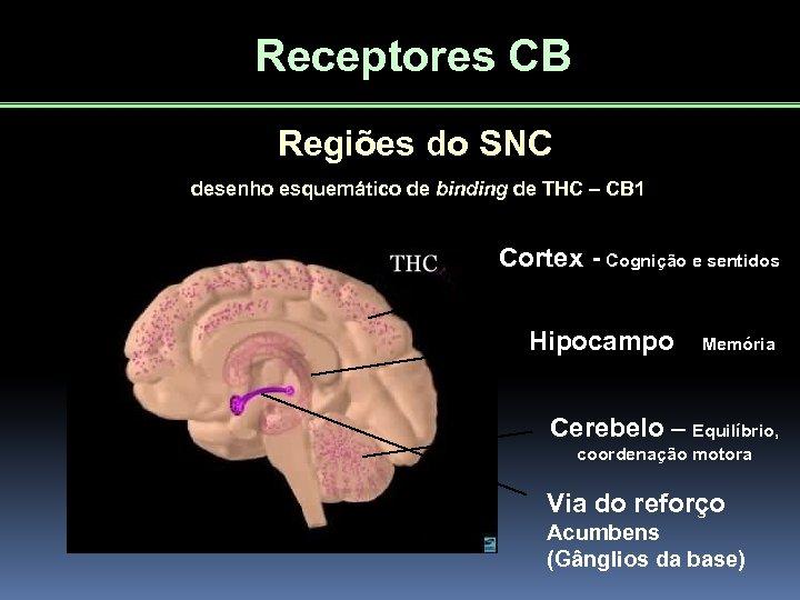 Receptores CB Regiões do SNC desenho esquemático de binding de THC – CB 1
