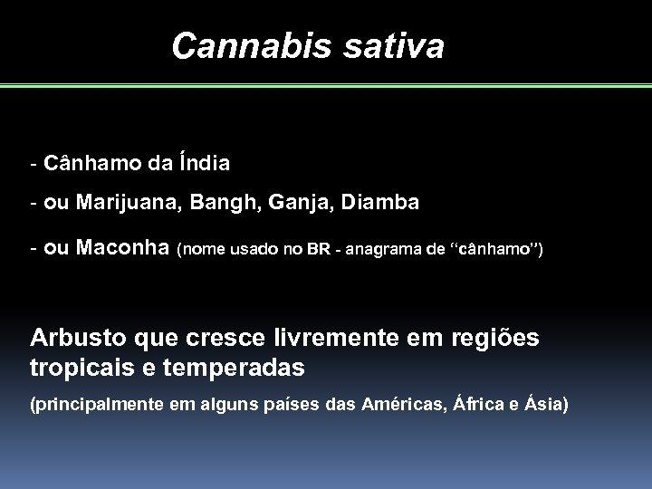 Cannabis sativa - Cânhamo da Índia - ou Marijuana, Bangh, Ganja, Diamba - ou