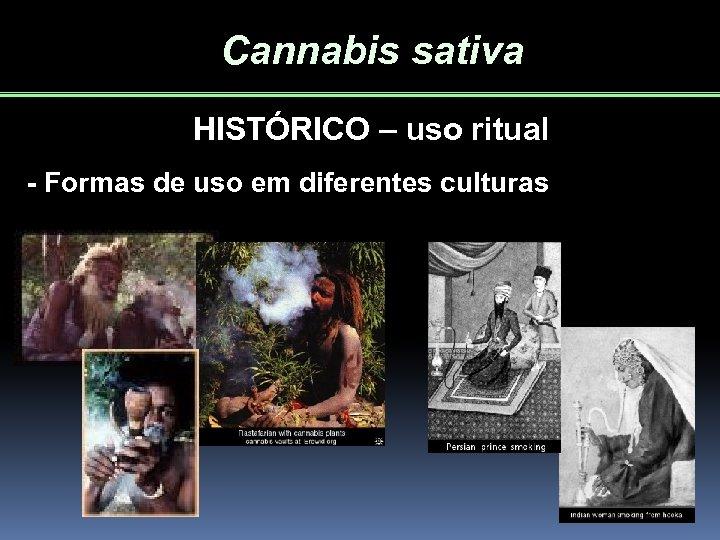 Cannabis sativa HISTÓRICO – uso ritual - Formas de uso em diferentes culturas