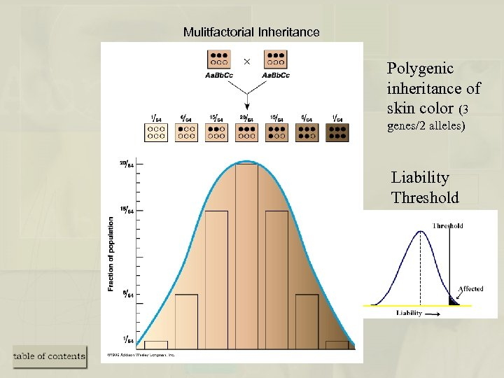Mulitfactorial Inheritance Polygenic inheritance of skin color (3 genes/2 alleles) Liability Threshold