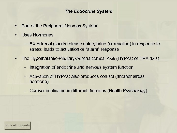 The Endocrine System • Part of the Peripheral Nervous System • Uses Hormones –