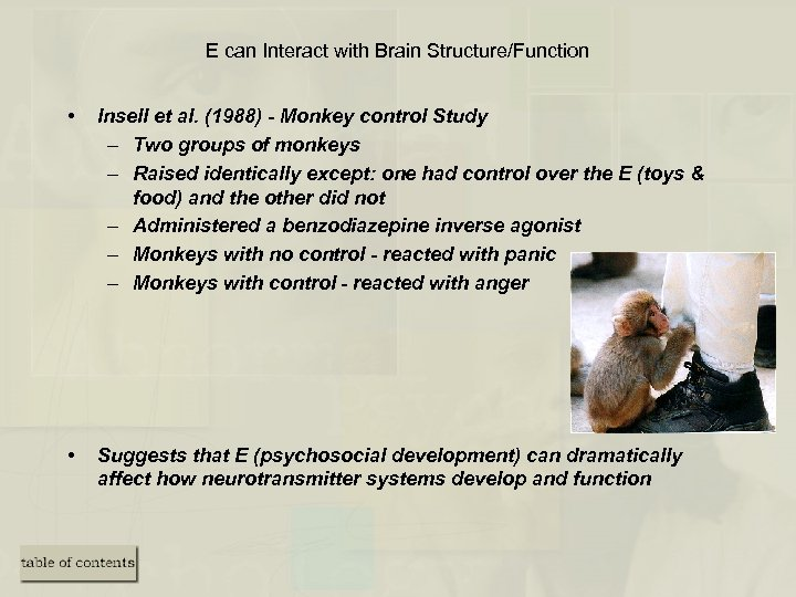 E can Interact with Brain Structure/Function • Insell et al. (1988) - Monkey control