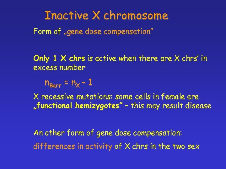 "Inactive X chromosome Form of ""gene dose compensation"" Only 1 X chrs is active"