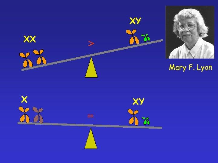 XY XX > Mary F. Lyon X XY =