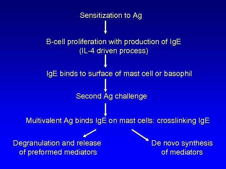 Sensitization to Ag B-cell proliferation with production of Ig. E (IL-4 driven process) Ig.