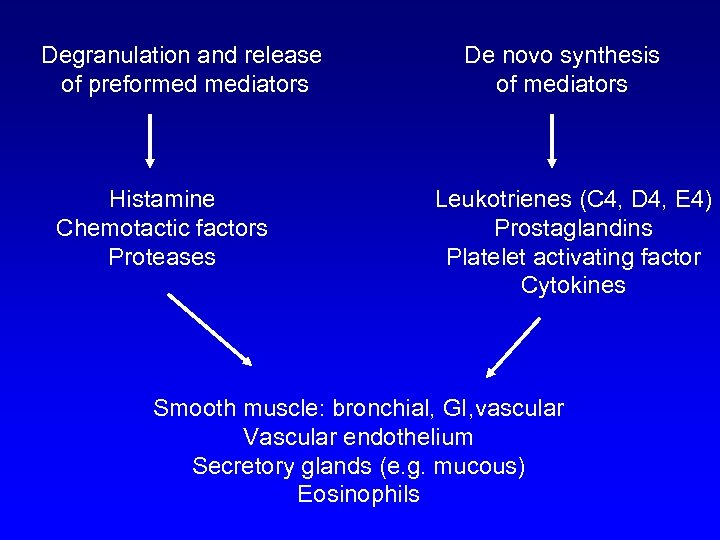 Degranulation and release of preformed mediators Histamine Chemotactic factors Proteases De novo synthesis of