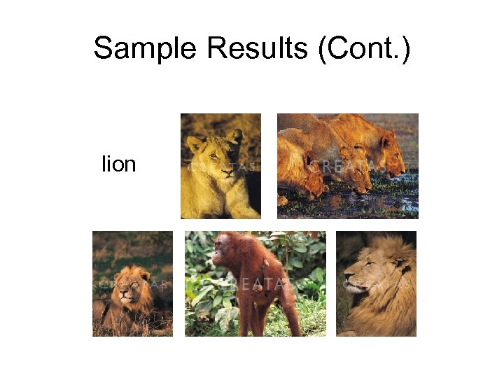Sample Results (Cont. ) lion