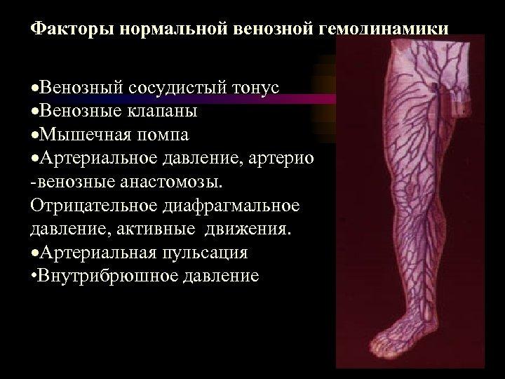 Факторы нормальной венозной гемодинамики ·Венозный сосудистый тонус ·Венозные клапаны ·Мышечная помпа ·Артериальное давление, артерио