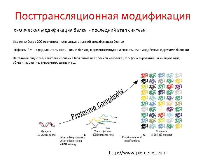 Посттрансляционная модификация химическая модификация белка - последний этап синтеза Известно более 200 вариантов посттрансляционной