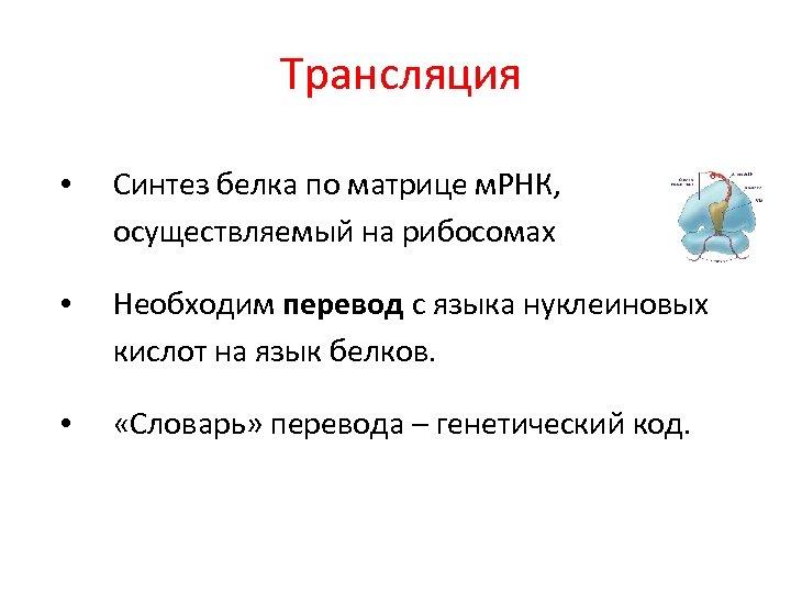 Трансляция • Синтез белка по матрице м. РНК, осуществляемый на рибосомах • Необходим перевод