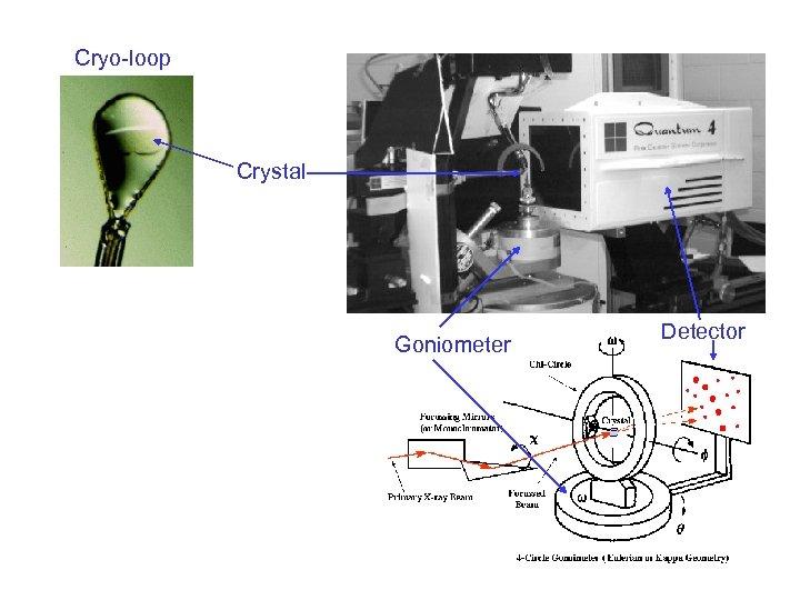 Cryo-loop Crystal Goniometer Detector