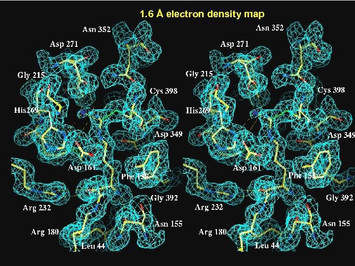 1. 6 Å electron density map