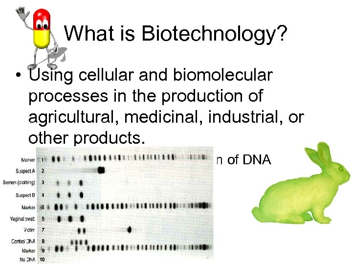 What is Biotechnology? • Using cellular and biomolecular processes in the production of agricultural,