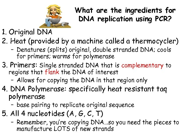 What are the ingredients for DNA replication using PCR? 1. Original DNA 2. Heat