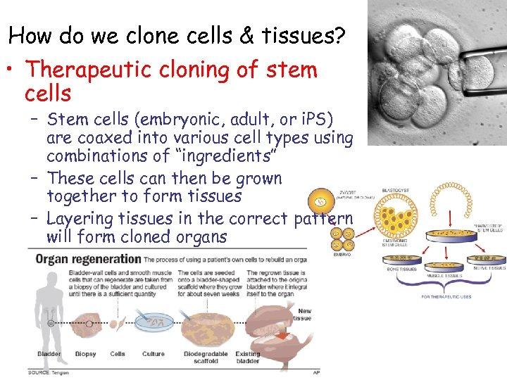 How do we clone cells & tissues? • Therapeutic cloning of stem cells –