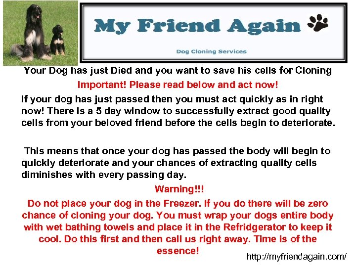 Your Dog has just Died and you want to save his cells for Cloning