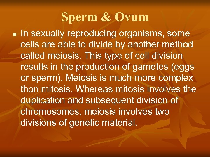 Sperm & Ovum n In sexually reproducing organisms, some cells are able to divide