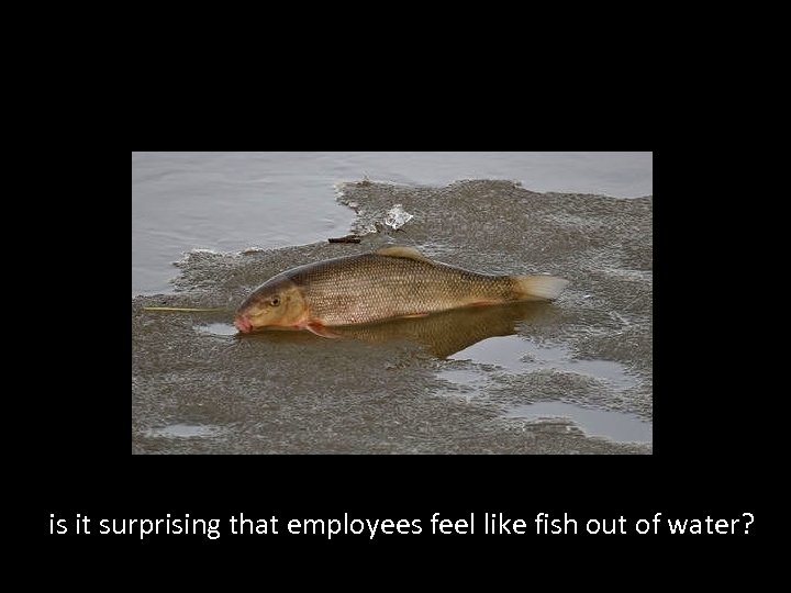is it surprising that employees feel like fish out of water?