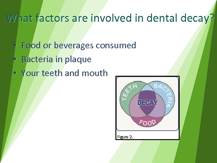 What factors are involved in dental decay? • • • Food or beverages consumed
