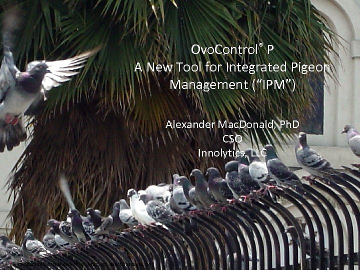 """Ovo. Control® P A New Tool for Integrated Pigeon Management (""""IPM"""") Alexander Mac. Donald,"""