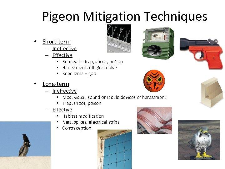 Pigeon Mitigation Techniques • Short-term – Ineffective – Effective • Removal – trap, shoot,