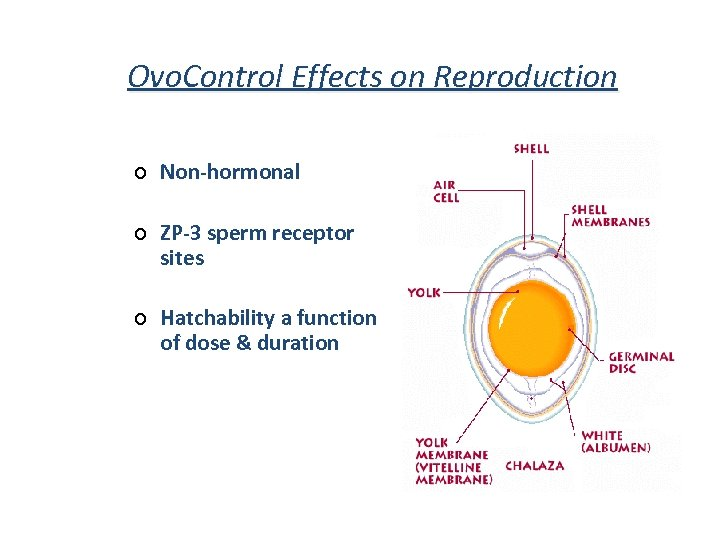 Ovo. Control Effects on Reproduction ¢ Non-hormonal ¢ ZP-3 sperm receptor sites ¢ Hatchability