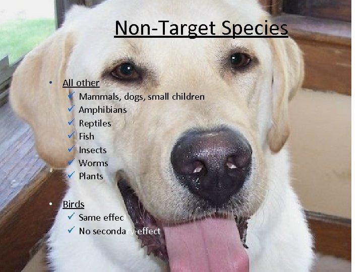 Non-Target Species • All other ü Mammals, dogs, small children ü Amphibians ü Reptiles