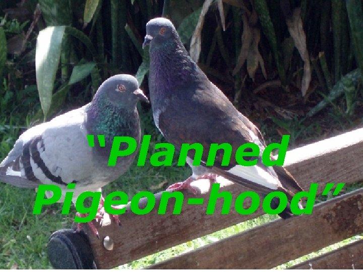 """Planned Pigeon-hood"""
