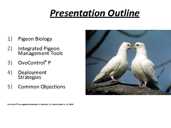 Presentation Outline 1) Pigeon Biology 2) Integrated Pigeon Management Tools 3) Ovo. Control® P