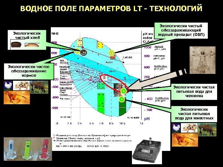 ВОДНОЕ ПОЛЕ ПАРАМЕТРОВ LT - ТЕХНОЛОГИЙ Экологически чистый хлеб Экологически чистый обеззараживающий водный препарат