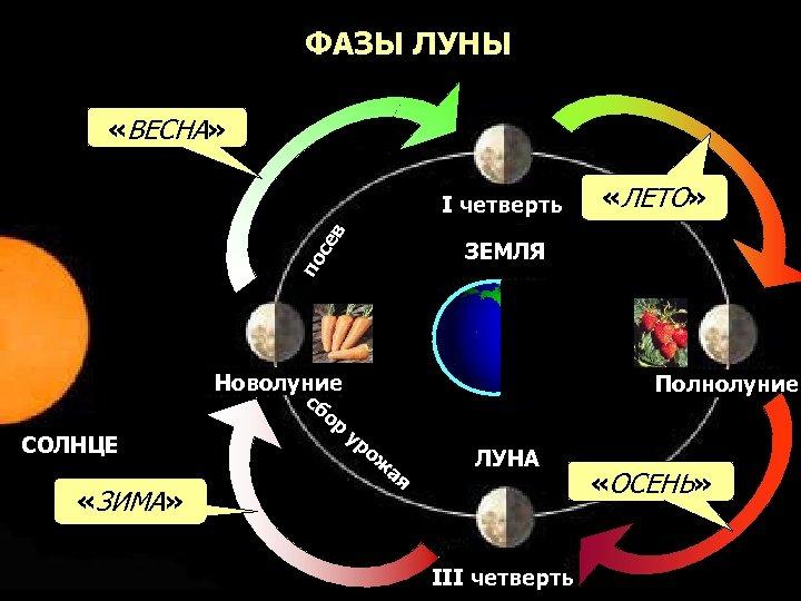 ФАЗЫ ЛУНЫ «ВЕСНА» се в I четверть по ЗЕМЛЯ Новолуние сб о СОЛНЦЕ «ЗИМА»