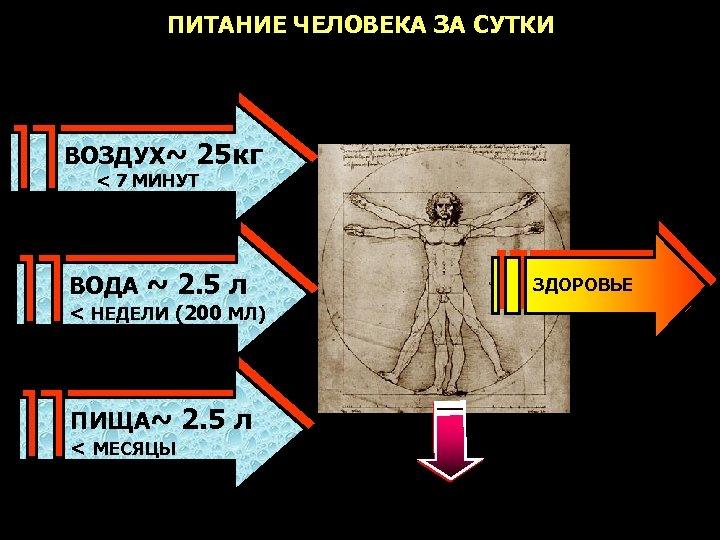 ПИТАНИЕ ЧЕЛОВЕКА ЗА СУТКИ ВОЗДУХ~ 25 кг < 7 МИНУТ ВОДА ~ 2. 5