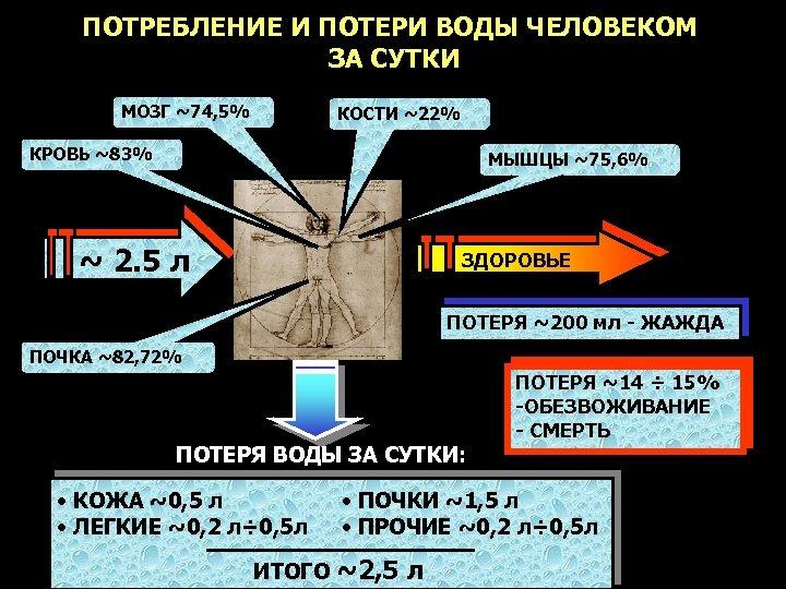 ПОТРЕБЛЕНИЕ И ПОТЕРИ ВОДЫ ЧЕЛОВЕКОМ ЗА СУТКИ МОЗГ ~74, 5% КОСТИ ~22% КРОВЬ ~83%