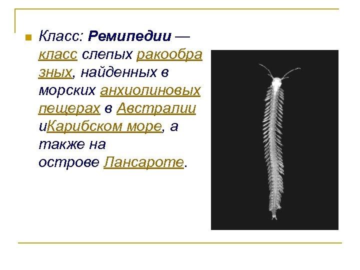 n Класс: Ремипедии — класс слепых ракообра зных, найденных в морских анхиолиновых пещерах в
