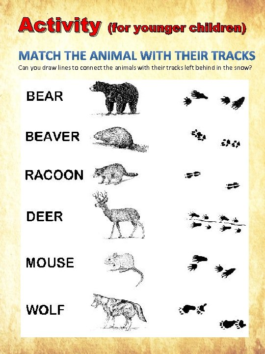 Activity (for younger children) Can you draw lines to connect the animals with their