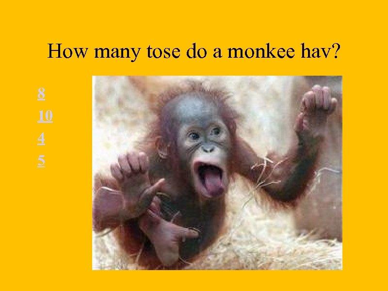 How many tose do a monkee hav? 8 10 4 5