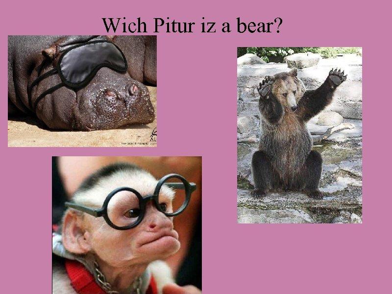 Wich Pitur iz a bear?