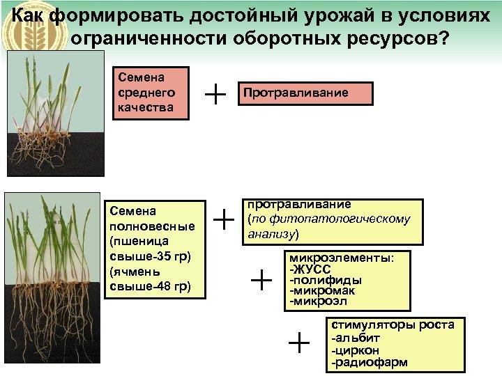 Как формировать достойный урожай в условиях ограниченности оборотных ресурсов? Семена среднего качества Семена полновесные