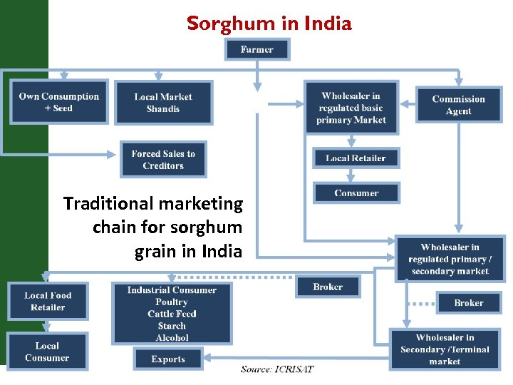 Sorghum in India Traditional marketing chain for sorghum grain in India