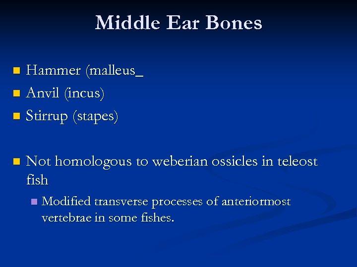 Middle Ear Bones Hammer (malleus_ n Anvil (incus) n Stirrup (stapes) n n Not