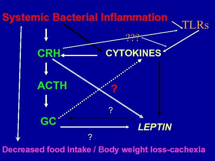 Systemic Bacterial Inflammation TLRs ? ? ? CRH ACTH CYTOKINES ? ? GC LEPTIN