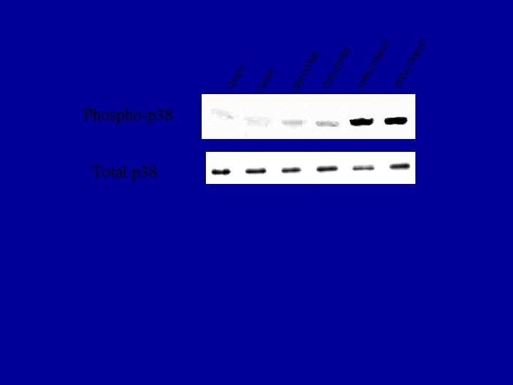 Phospho-p 38 Total p 38 l ) /µl ng α( 10 TN F ng